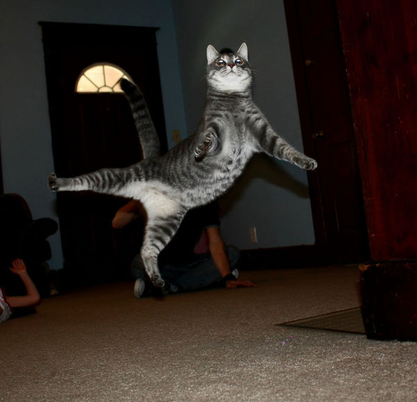 21 Jumping Cats That Totally Look Like Ninjas