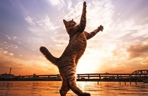 Jumping Cats At Play Look Like Ninjas
