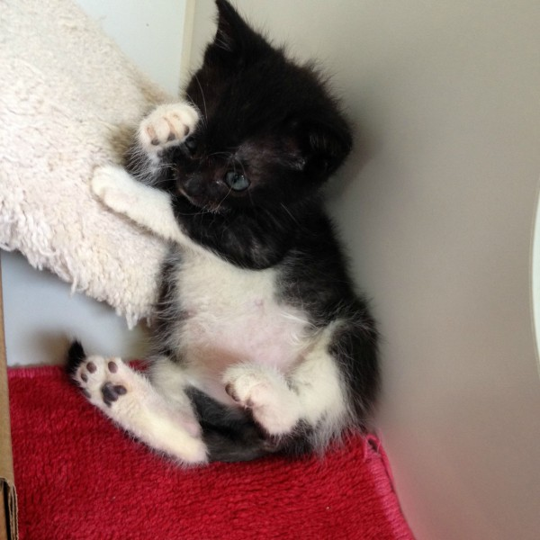 images of kittens