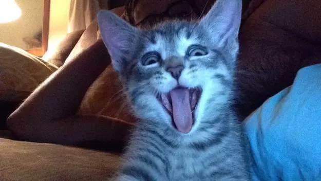 photos of kittens 10 (1)