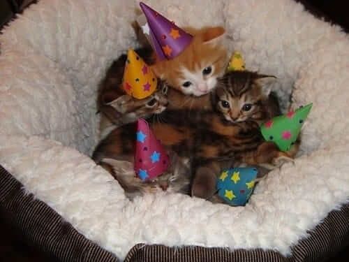 pictures of cat babies 15 (1)