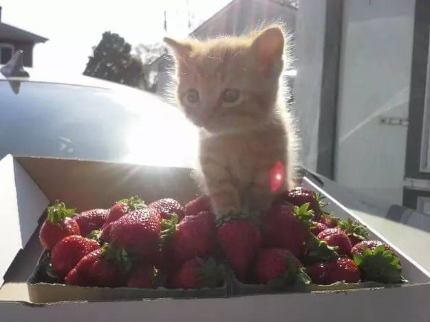 pictures of cat babies 19 (1)