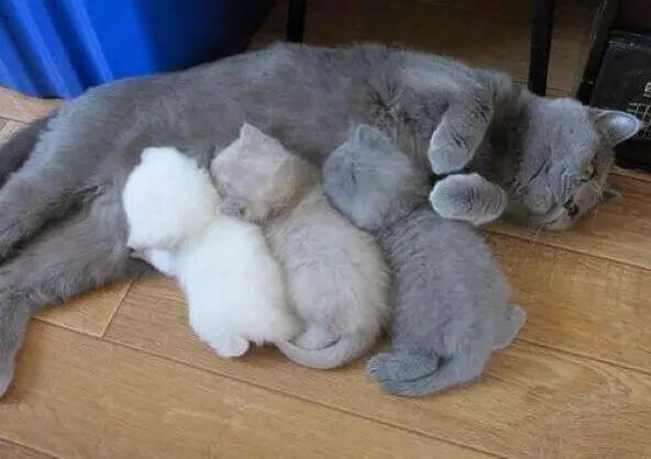 pictures of cat babies 22 (1)