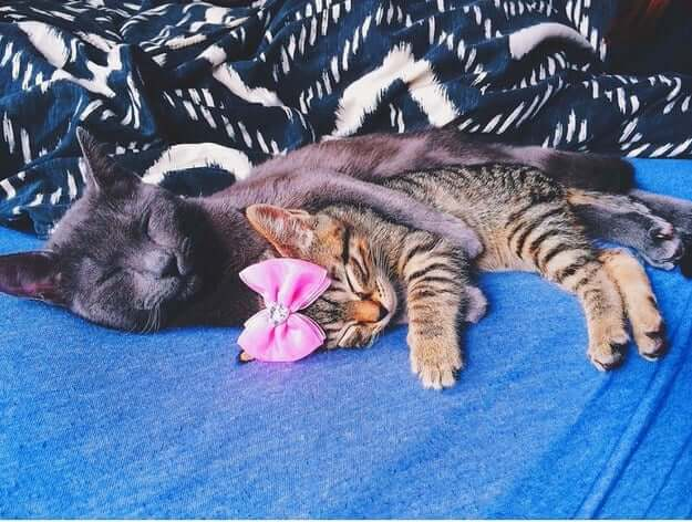 pictures of cat babies 24 (1)
