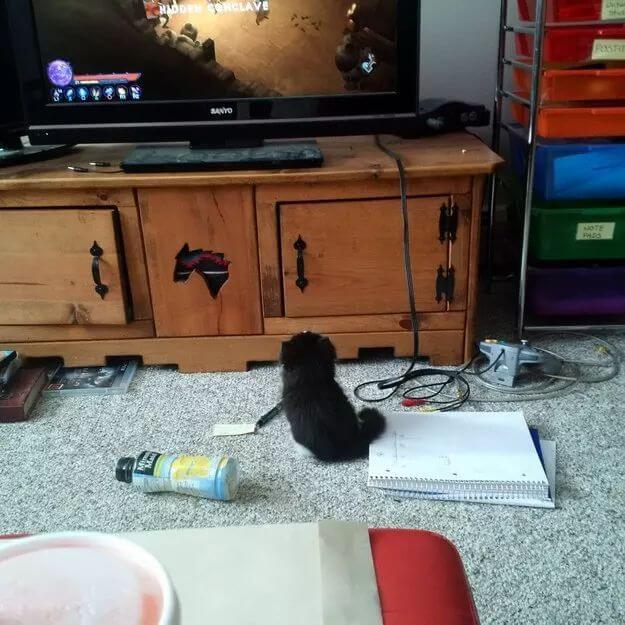 pictures of cat babies 27 (1)