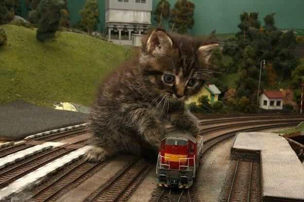 kitten pictures 29 (1)