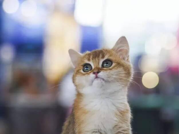 kitten pictures 30 (1)