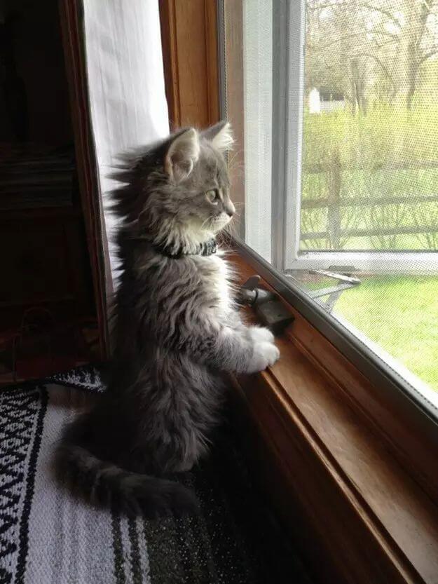 kitten pictures 32 (1)