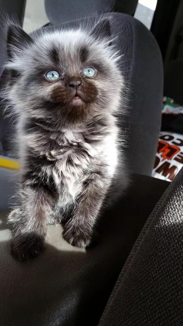 kitten pictures 38 (1)