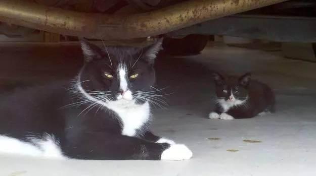 photos of kittens 4 (1) (1)