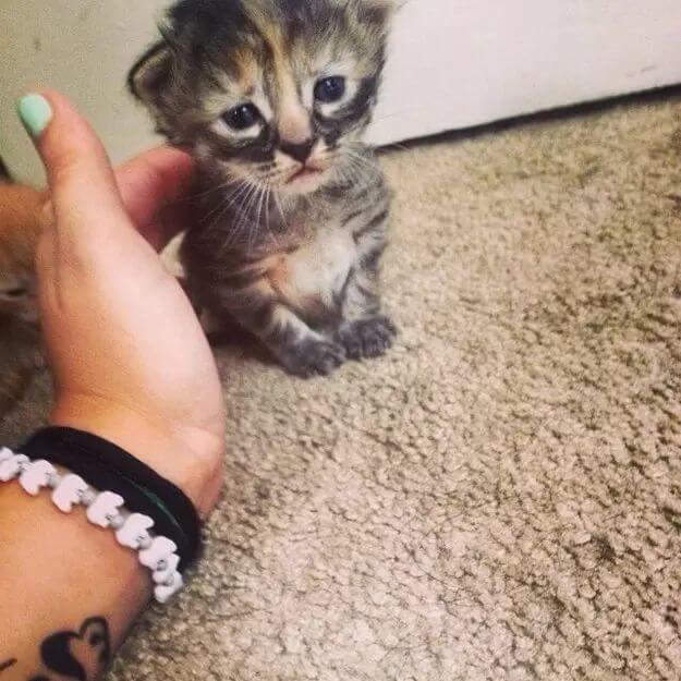 kitten pictures 40 (1)