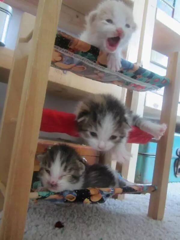 kitten pictures 41 (1)