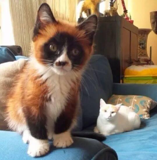 kitten portraits 48 (1)