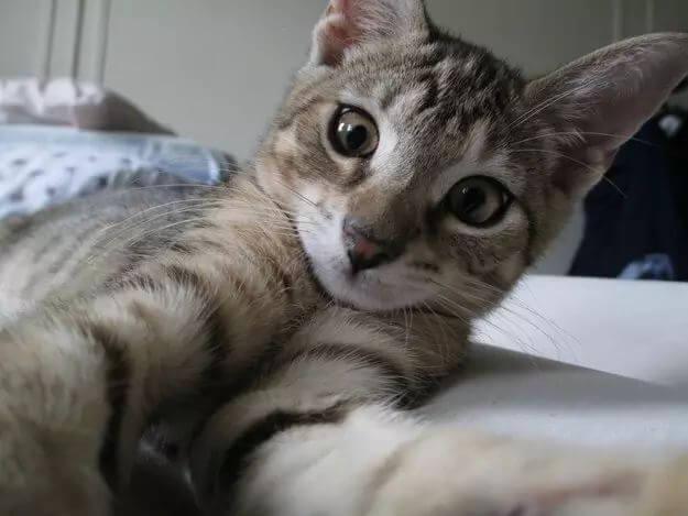 kitten portraits 53 (1)