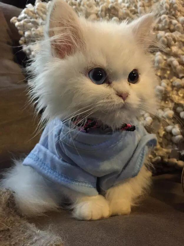 adorable of kittens 61 (1)