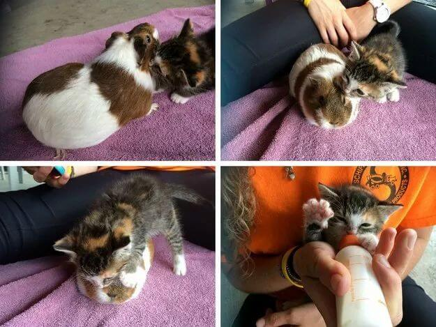 adorable of kittens 62 (1)