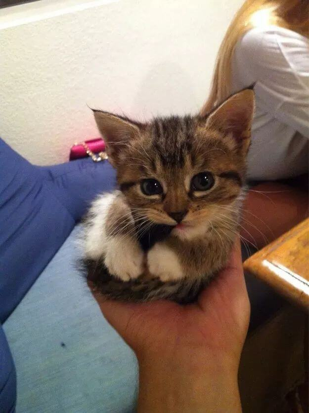 adorable of kittens 63 (1)