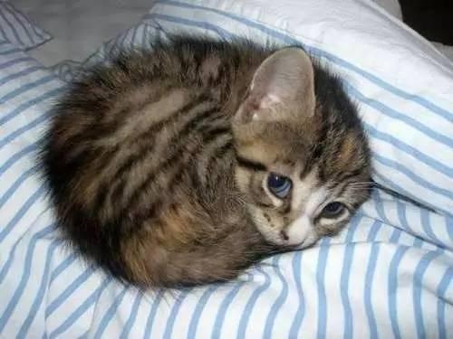 photos of kittens 7 (1)