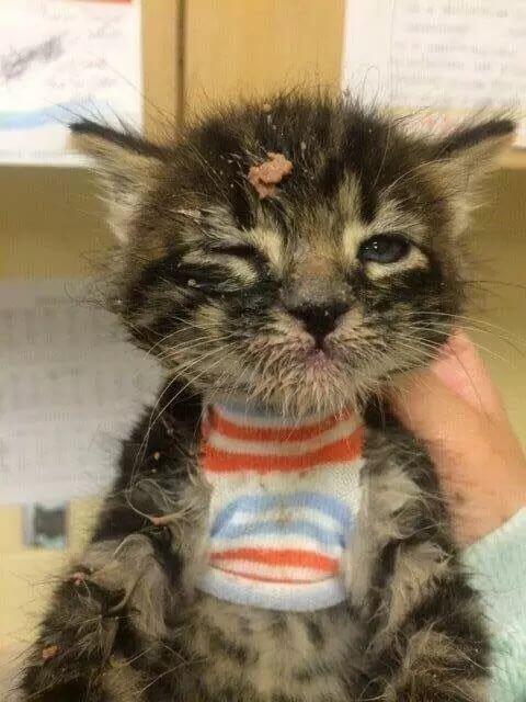 cute of kittens 72 (1)
