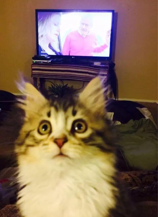 cute of kittens 73 (1)