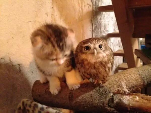 cute of kittens 74 (1)