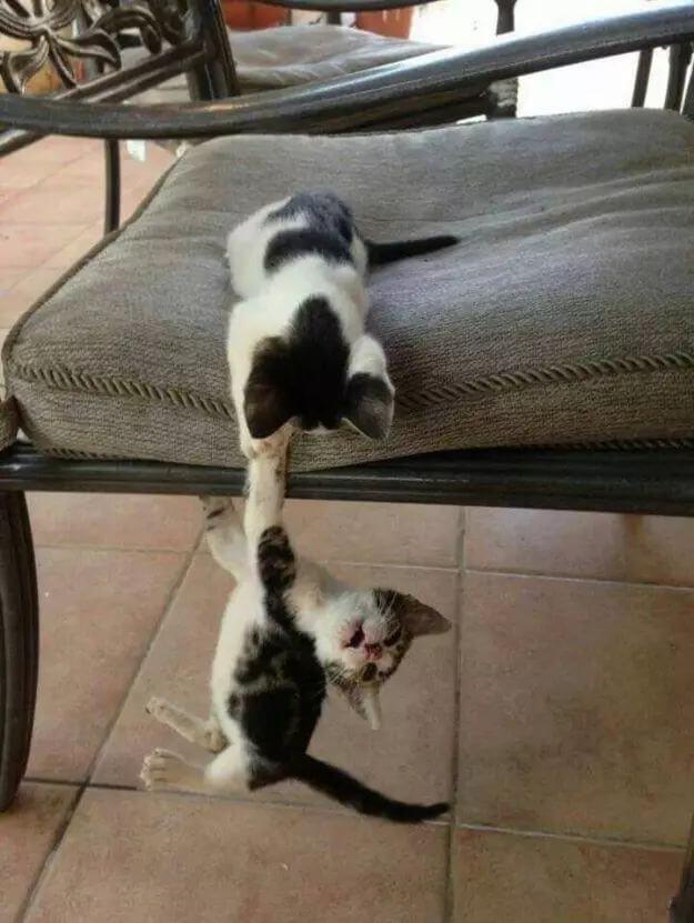 cute of kittens 75good (1)