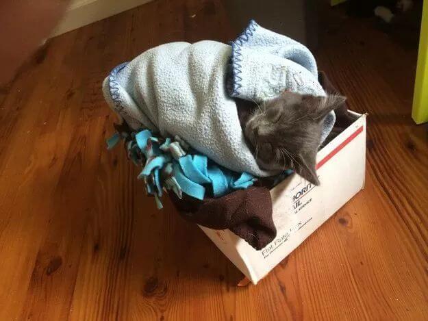 cute of kittens 78 (1)