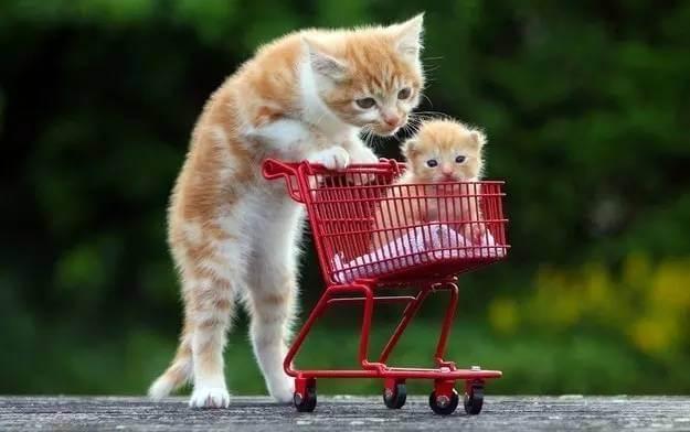 photos of kittens 8 (1)
