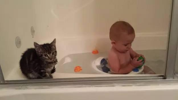photos of kittens 9 (1)