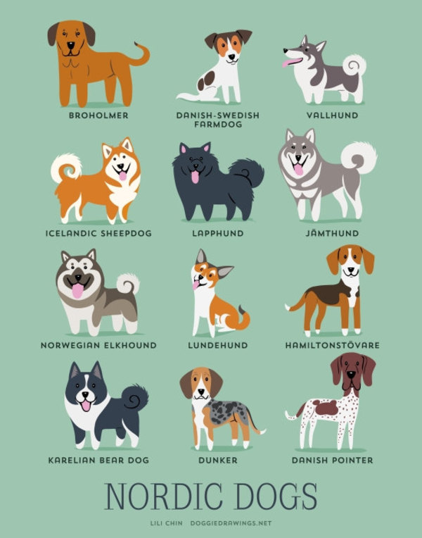 information about dogs - nordic  dogs