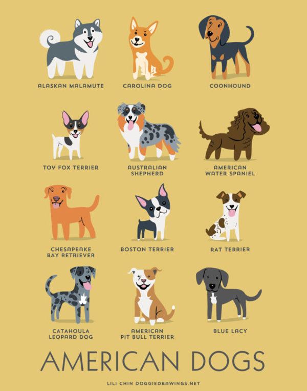 information about dogs - american  dogs