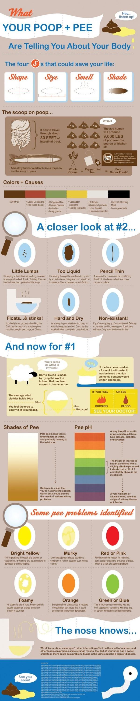 poop infographic