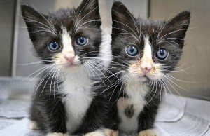 25 Animal Twins That Are Tough To Tell Apart