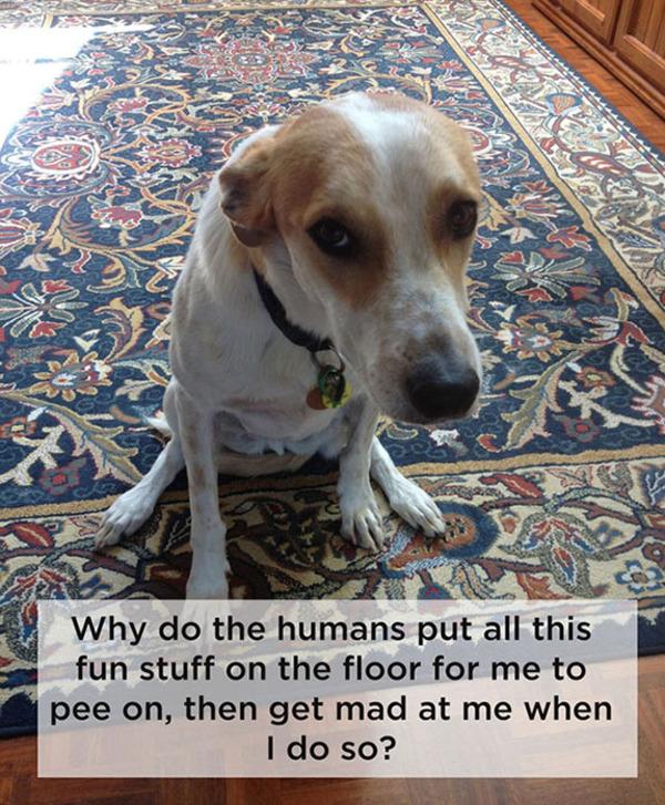talking dogs