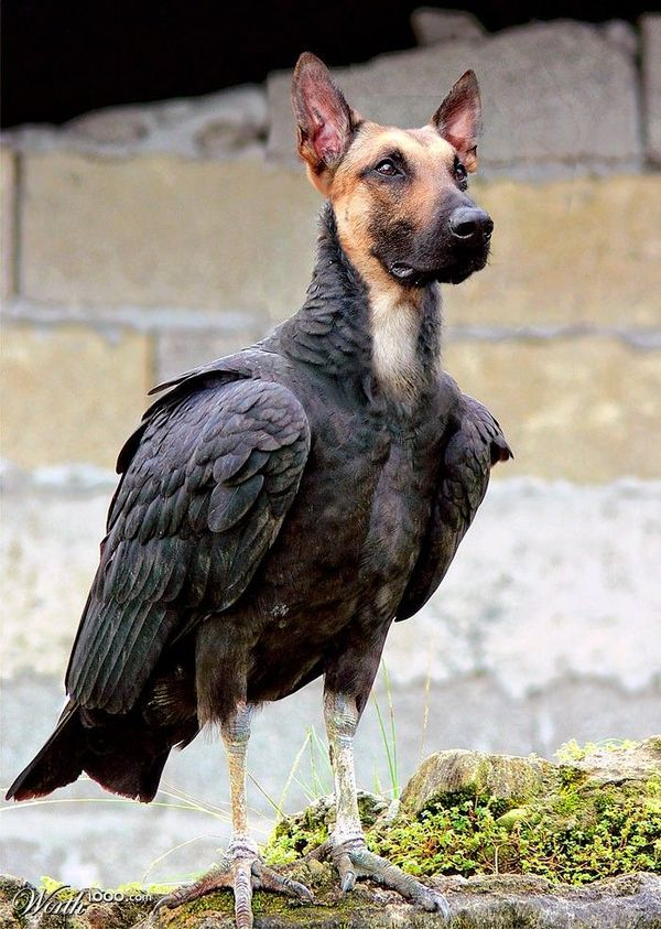 dog as birds