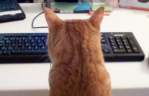 coletheblackcat--0071--what-its-like-to-work-with-cats--large.thumb