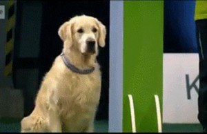 fdog-wining