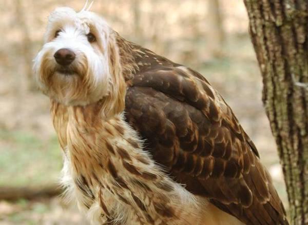 dog as birds