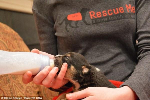 cute puppy rescued
