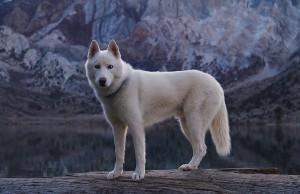 dog-adventures-john-stortz-9