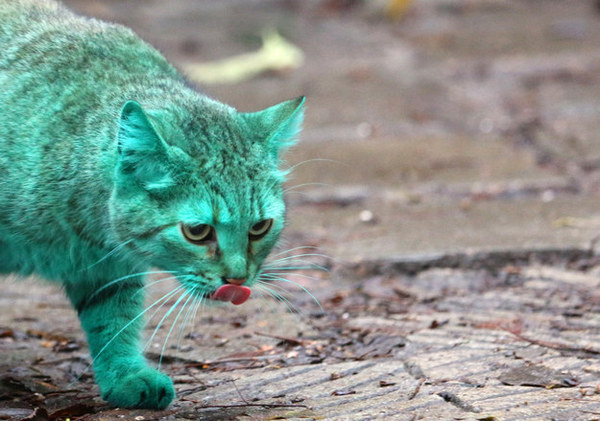 green is cat