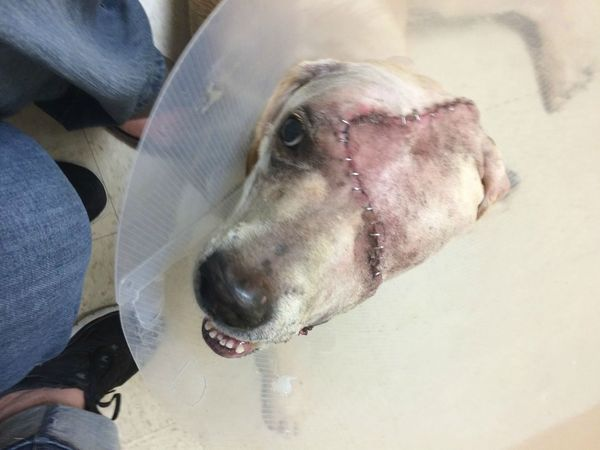 dog cancer recovery