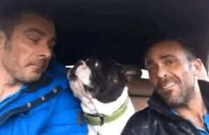 you-need-to-watch-this-adorable-bulldog-sing-alon-2-26431-1417464838-3_dblbig