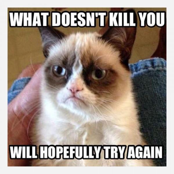 angry cat revenge