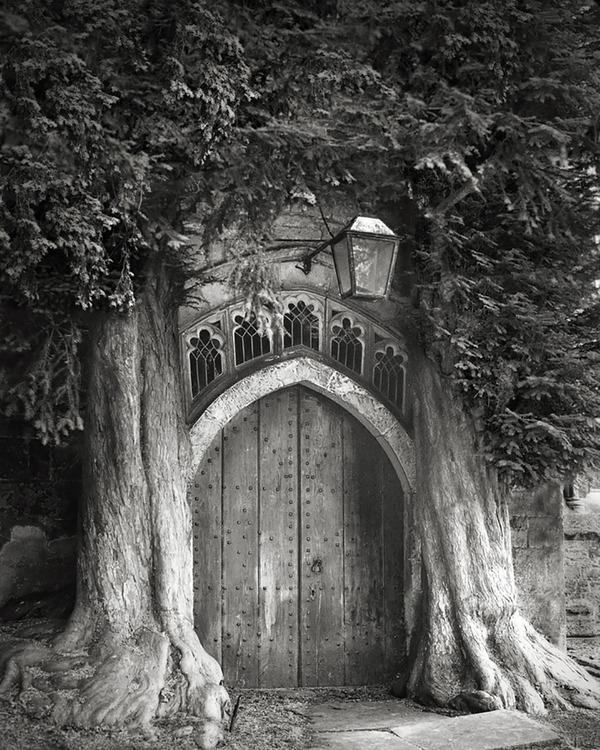 world's ancient trees