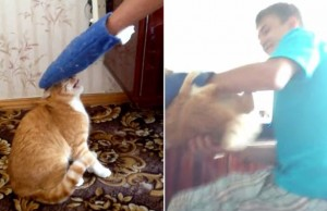 TEASER-Cat-who-doesnt-like-being-petted-gets-its-revenge