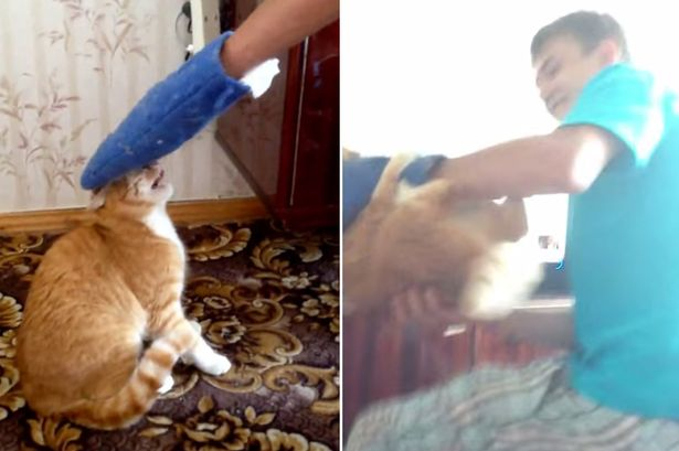 heres why you should never mess with an angry cat