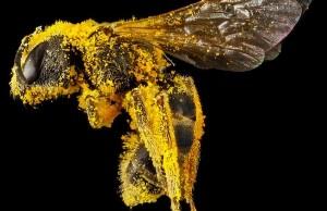 amazing bee portraits