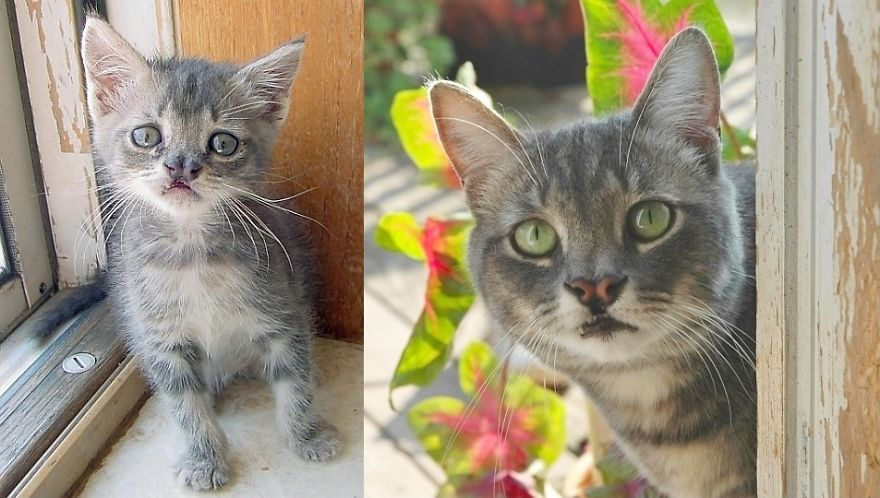 before and after cats
