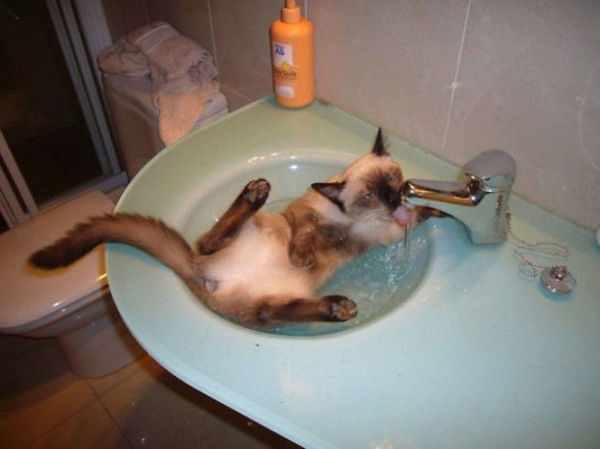 cats who like water